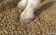 straw pellets granules for hourse bedding made in russia 02