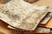 Birch bark russian origin exported in plates 04