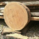 Tree trunk cross sawn slab russian origin 06