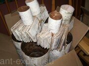 Birch bark russian origin exported in plates 06
