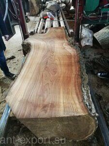 Tree trunk longitudinal slab russian origin 04
