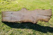 Tree trunk longitudinal slab russian origin 03